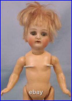 Antique Bisque Head Doll Kammer Reinhardt Simon Halbig Composition Body Scarce